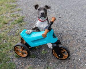 FUNNY WHEELS Rider odrážedlo se psem